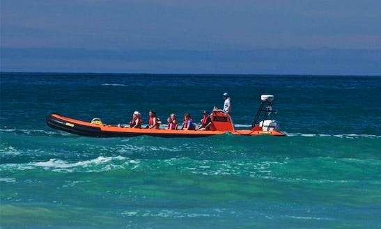 Coastal Power Boat Tour (1 Hour) In Padstow, England