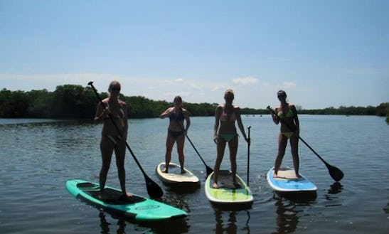 Stand-up Paddle Boards For Rent In St Petersburg