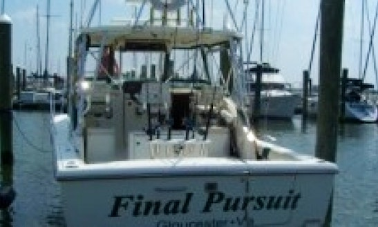 30ft Pursuit 300 Offshore Fishing Charter In Hampton, Virginia