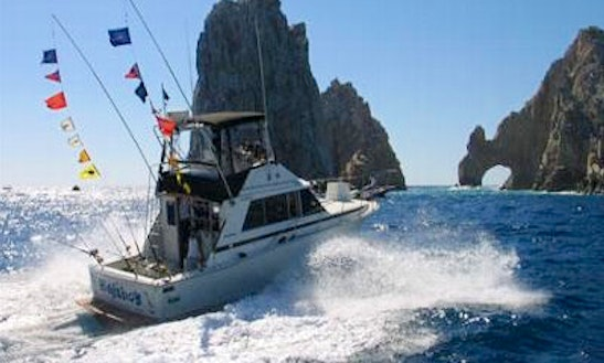 Fishing Charters On 31' Bertram Sports Fisherman Yacht In Cabo San Lucas, Mexico