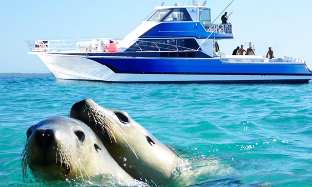 Sea Lion & Shark Cage Tours in Port Lincoln, Australia