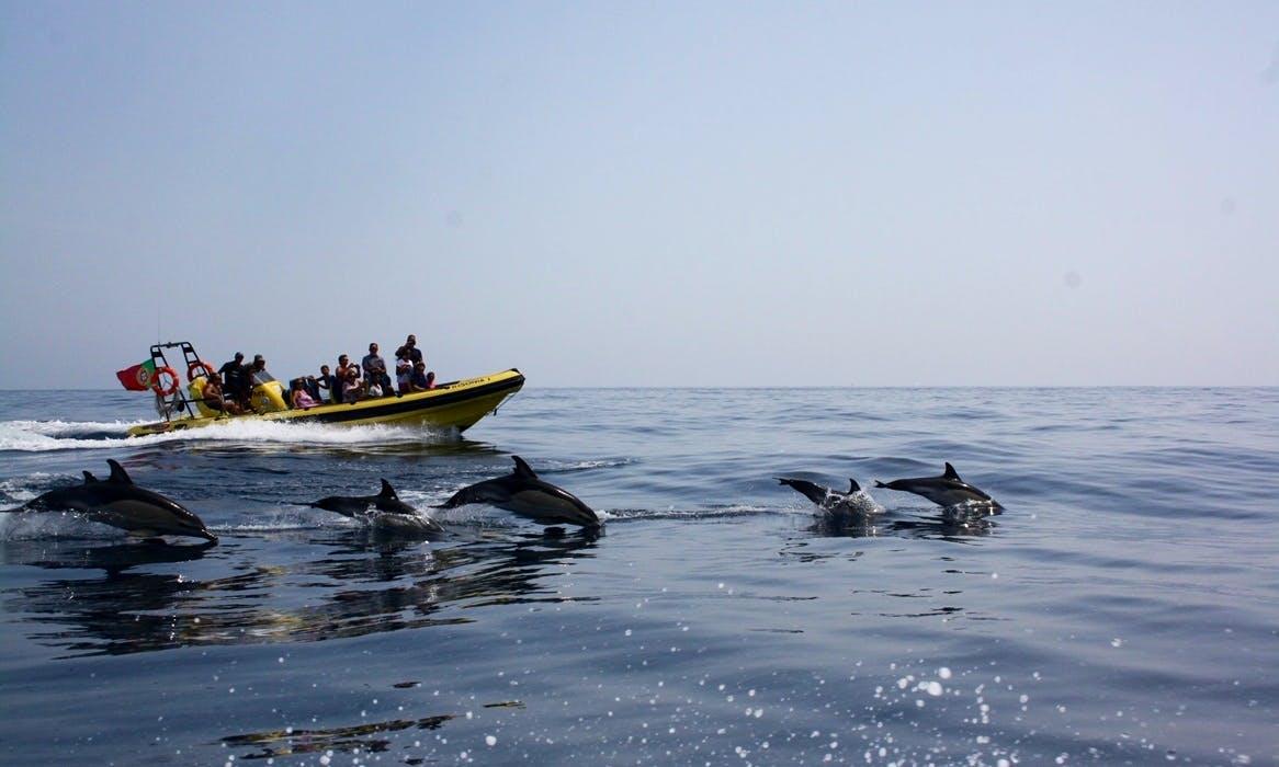 Amazing 12 People Insónia Passenger Boat Rental in Albufeira, Faro