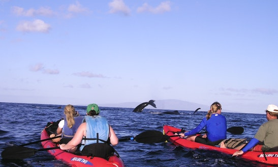 Private Kayak Tour - South Maui Turtle Town