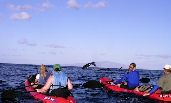 Private Kayak Tour - South Maui Turtle Town