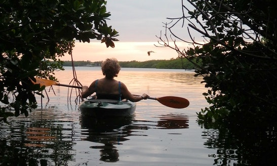 Kayak Rental In Tavernier