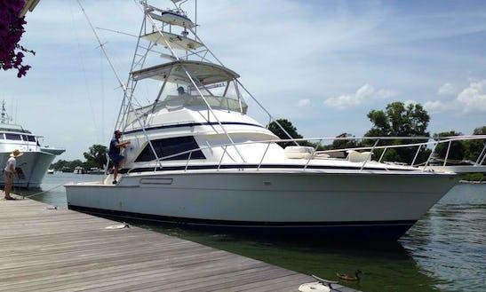 Fishing Charter On 43' Bertram Yacht In Virginia Beach, Virginia