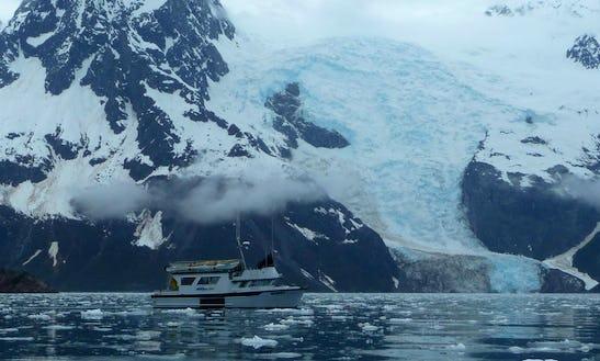38' Eco Tour Charter In Seward, Alaska