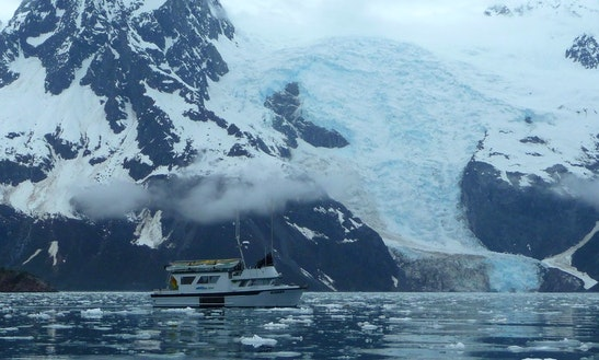 38' Eco Tour Charter In Seward, Alaska