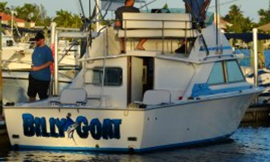 "28ft ""billy Goat"" Bertram Sportfisherman Boat Charter In Boynton Beach, Florida"