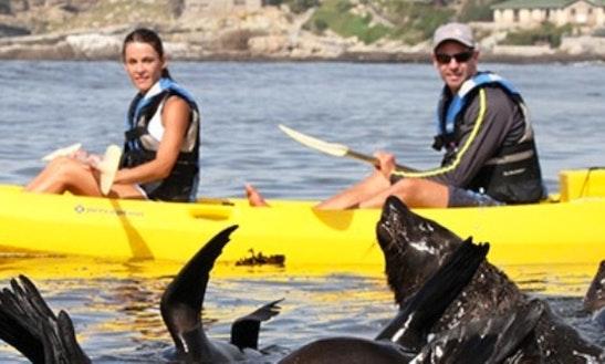 Kayak Tour In Hermanus