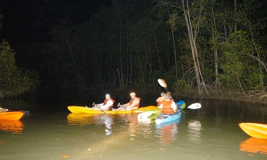 Night Mangrove Kayaking Passenger Boat Taxi In Jaco