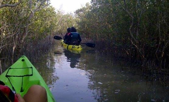 Mangrove Kayak Tour From Abu Dhabi