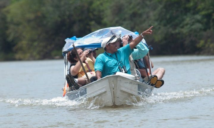 Hoatzin Tour in Georgetown, Guyana