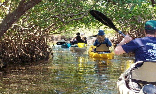 Palm Island Kayak Fishing, Eco Tours, & Rentals