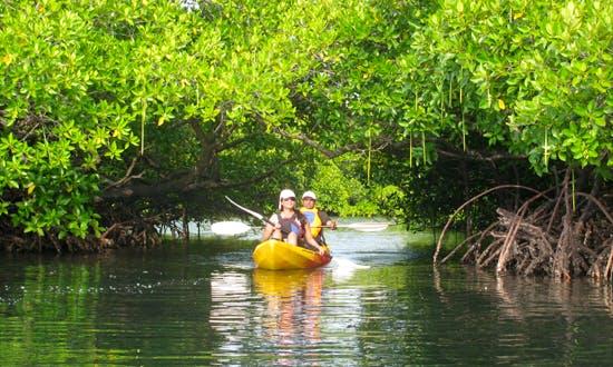 Mangrove Kayak Tour  in Andaman/Nicobar Islands