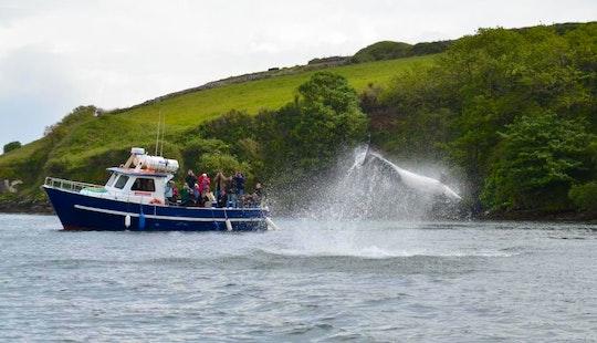 Power Boat Adam Patricia  Charterin Dingle
