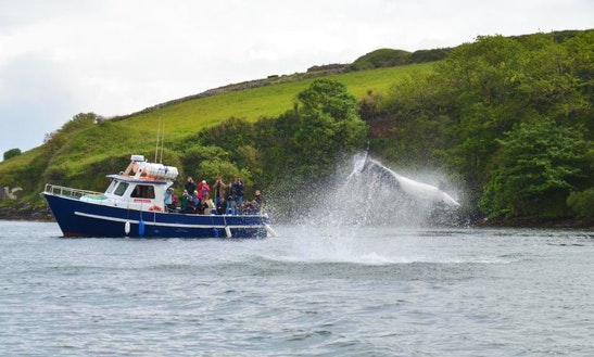 Power Boat Adam Patricia  Charterin Dingle