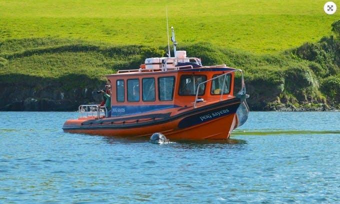 Boat Trips & Island Landing in Dingle Bay