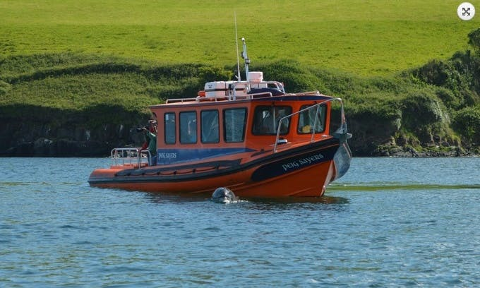 Boat Trips & Island Landing in Dingle Bay