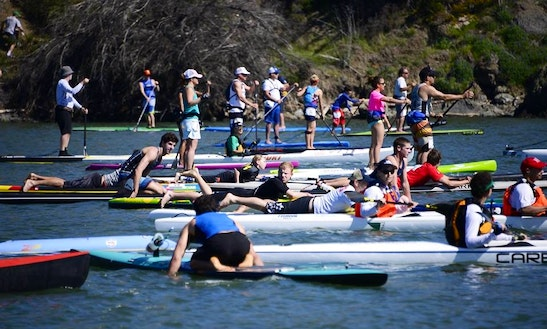 Stand Up Paddleboard Yoga & Rentals, In San Francisco & Marin County