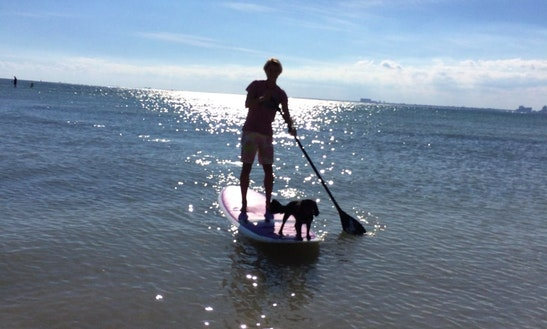 Paddleboard Rental In Key Biscayne