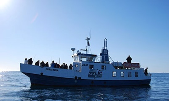 Passenger Boat Rental In Reykjavík