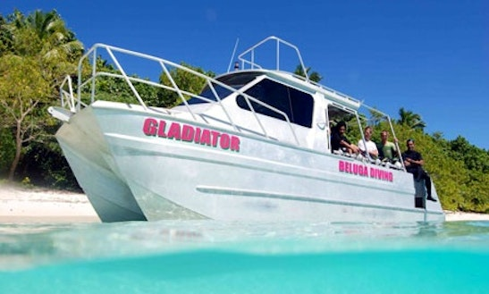 Whale Watching Charters In Tonga
