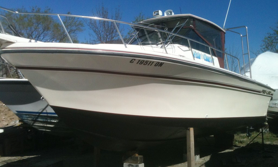 28ft Proline Coastal Sportfisherman Boat Fishing Charter With Captain Dave In Lake Ontario, Canada