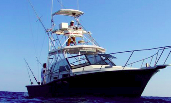 31' Sportfishing Charter In The Pacific