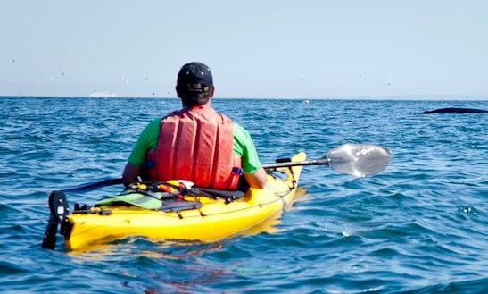 Single Touring Kayak Rental In New Brunswick & Newfoundland