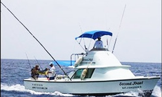 31' Bertram Sport Fishing Charter In Mexico