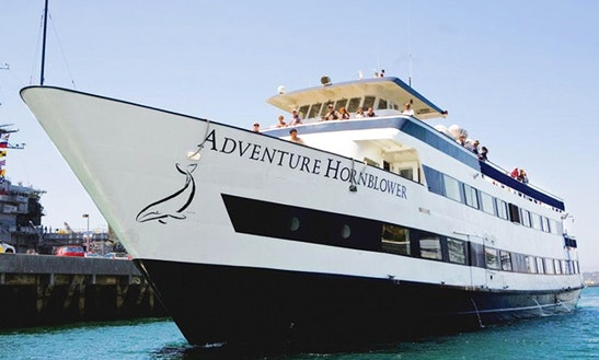 'adventure Hornblower' Whale & Dolphin Watching In San Diego
