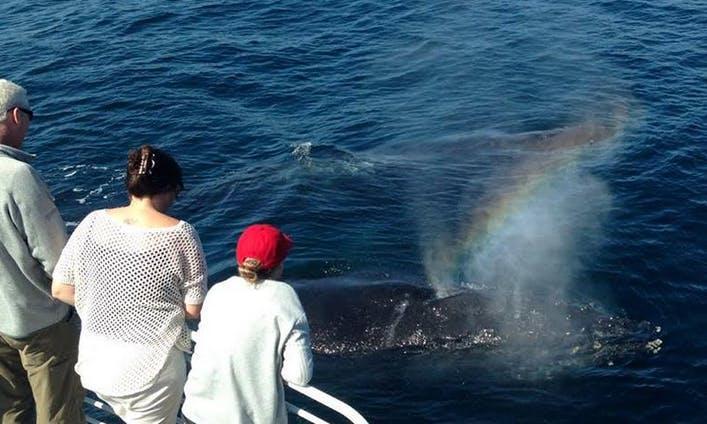 Whale Watching Charter in Santa Barbara, CA