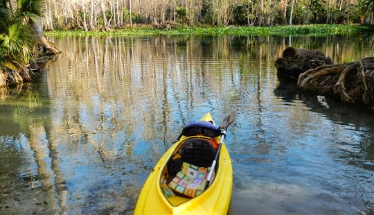 Rent A Kayak For A Day In Sarasota, Florida