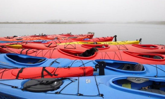 Kayak Rental In Santa Cruz