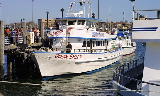 Yacht fishing trips on the ocean eagle v in brooklyn for Brooklyn fishing boat