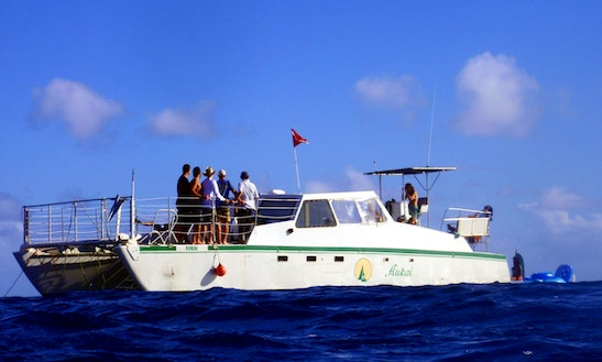 Enjoy Diving Trips On Power Catamaran In Honolulu, Hawaii