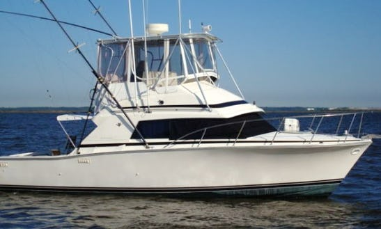 Bertram 33' Cruiser Sport Fisherman Rental In West Bay, Cayman Islands