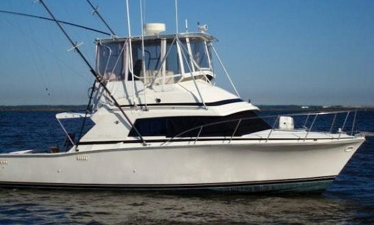 Bertram 33' Cruiser Sport Fisherman Rental In West Bay, Cayman Islands
