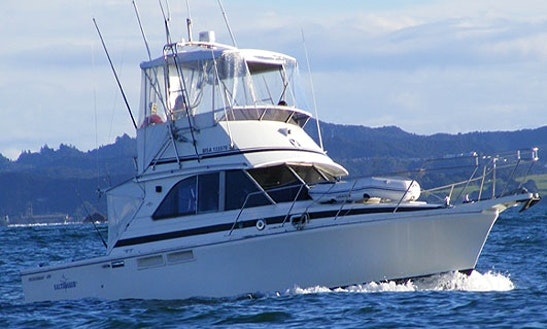 Enjoy 38' Bertram Sport Fishing Yacht In Paihia, Northland