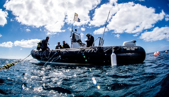 Diving Courses And Trips In Lanzarote