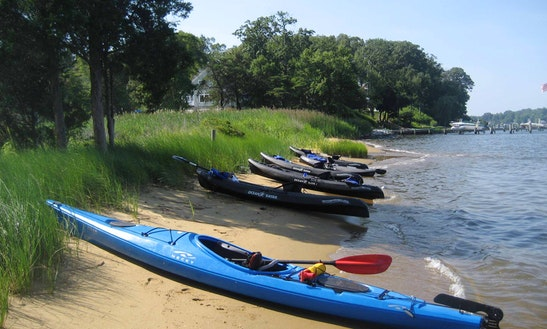 Guided Kayaking Tour In Annapolis