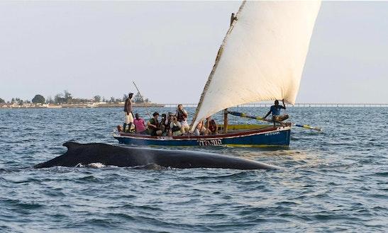Whale Watching Tours In Ilha De Moçambique