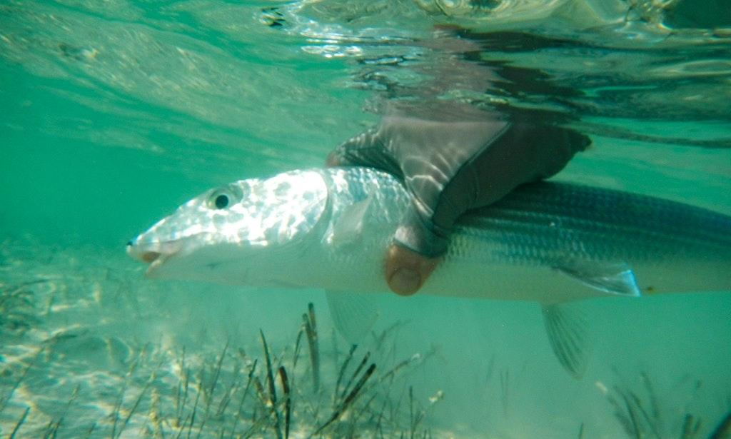 Bonefish paradise long island bahamas getmyboat for Fishing trips long island