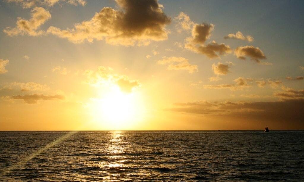 Dolphin Swimming Tours In Honolulu Hawaii