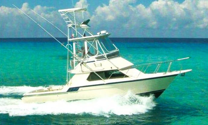 32' Sport Fisherman Charter in San Miguel, Mexico