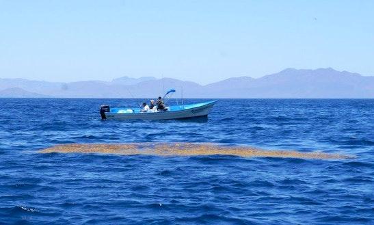 25' Center Console Super Panga Fishing Charter In Loreto, Mexico