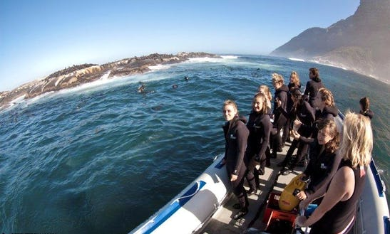 Seal Snorkelling Trips In Cape Town