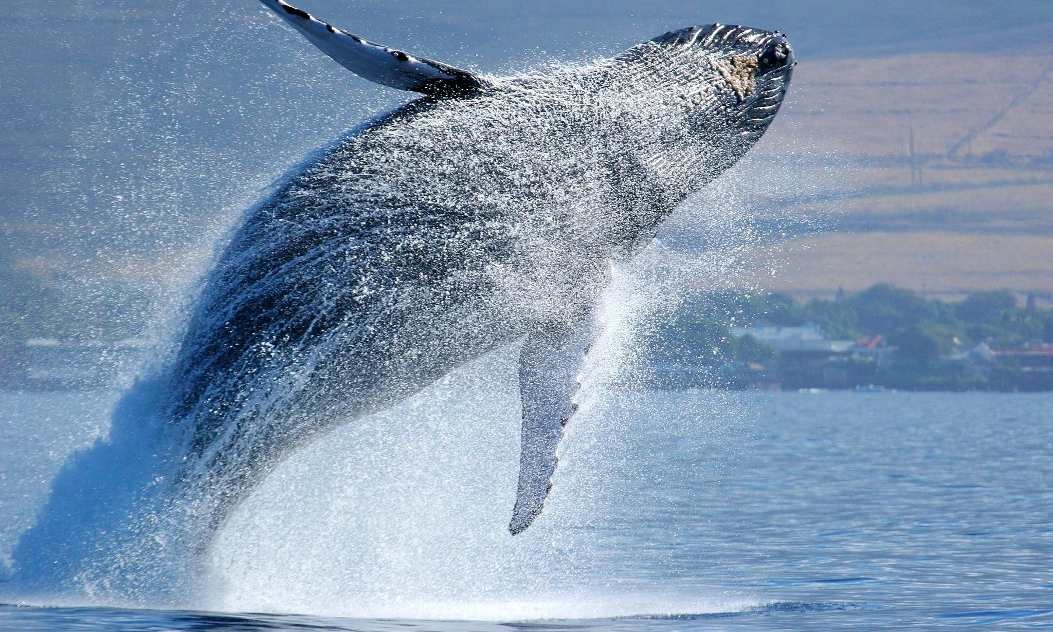 Whale Watching Boat Tours in Santiago, Panama