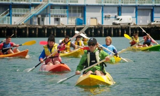 Kayaking Courses In Wellington, New Zealand
